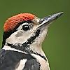 Steve Round Wildlife Photography