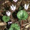 Plant Delights Nursery - Botanic Garden Blog