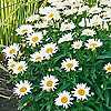 JeffCo Gardener | Colorado Gardening Blog