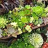 Gardening Gone Wild | Gardener World Gardening Blog
