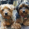 The Canine Chef Cookbook - Blog