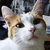 Bee Holistic Cat Rescue and Care - Blog