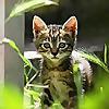 Kitty Desires