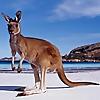 Down Under Endeavours Australia