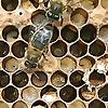 Scientific Beekeeping