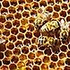 Chris Slade's Bee Blog
