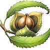 Chestnut School of Herbal Medicine