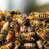 Vive La Hive