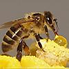 ABC beekeeping supplies