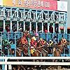 Horse Racing in Korea | Korea Racing Blog