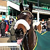 Philip Kirby Racehorse Trainer