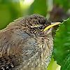 Ireland's Wildlife - Irish wildlife, nature and biodiversity