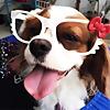 Petsodia | Pet Sitting Blog