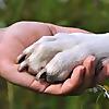 Marshall's Pet Zone | Pet Supplies Blog