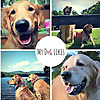 MyDogLikes   Pet Product Review and Guide Blog