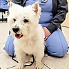 Lawndale Veterinary Hospital Blog