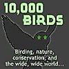 10,000 Birds