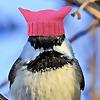 Laura's Birding Blog