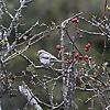 Robs Birding Blog