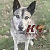 K9 Basics | New Jersey Dog Training and Off-Leash Control