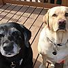 Recipes 4 Gourmet Dogs