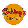 Schley's Bonsai Blog