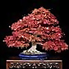 Valavanis Bonsai Blog