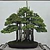 Bonsai Iterate