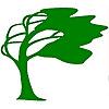 Bonsai Tree | Tree Talk