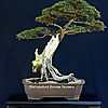 Bishopsford Bonsai Nursery
