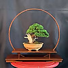 Knoxville Bonsai Society