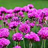 Ivy's Flower Garden | Youtube