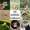 UK Wildlife