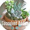 Succulent Addict
