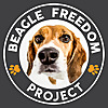 BFP | Beagle Freedom Project
