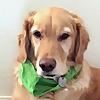 Fritz Dog