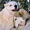 ColoradoWolf&WildlifeCenter