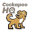 Cockapoo HQ - Cockapoo Breed information