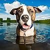 Dog Breath Photography Blog