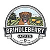 BrindleBerry Dog Photography