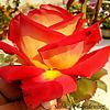 Subhajit Gardening