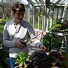 Windowsill Succulent Gardening