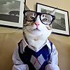 pecan the cat