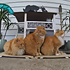 My 3 Feral Cats
