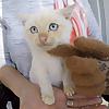 Frozen Kitten