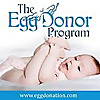The Egg Donor Program | Egg Donation Blog