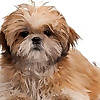 DGCO | Dog Grooming Courses Online