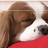 Pampered Dog Blog Dog Grooming