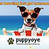 PuppyOye  Dog Boarding, Dog Daycare, Dog Training, Dog grooming