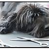 DIY dog grooming help